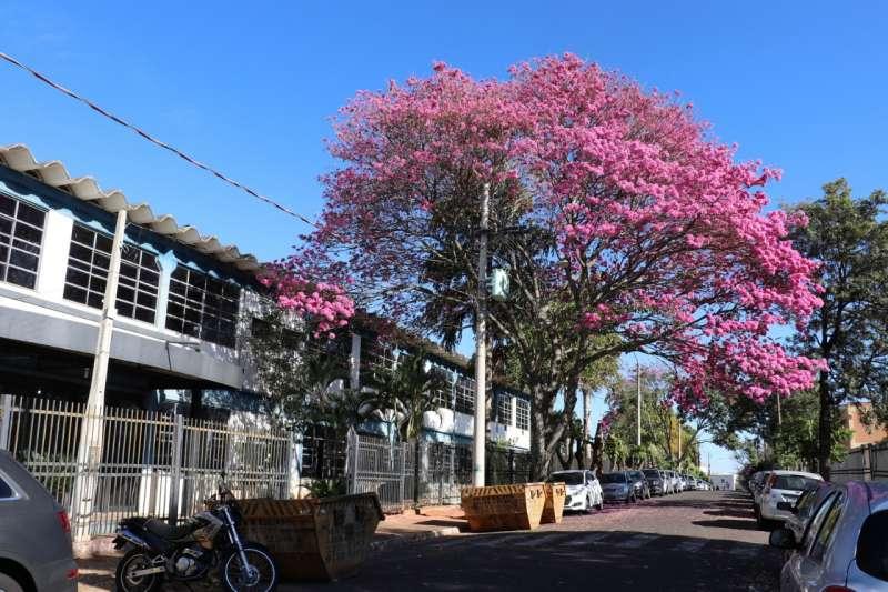 Empresa Paschoalotto em Marília