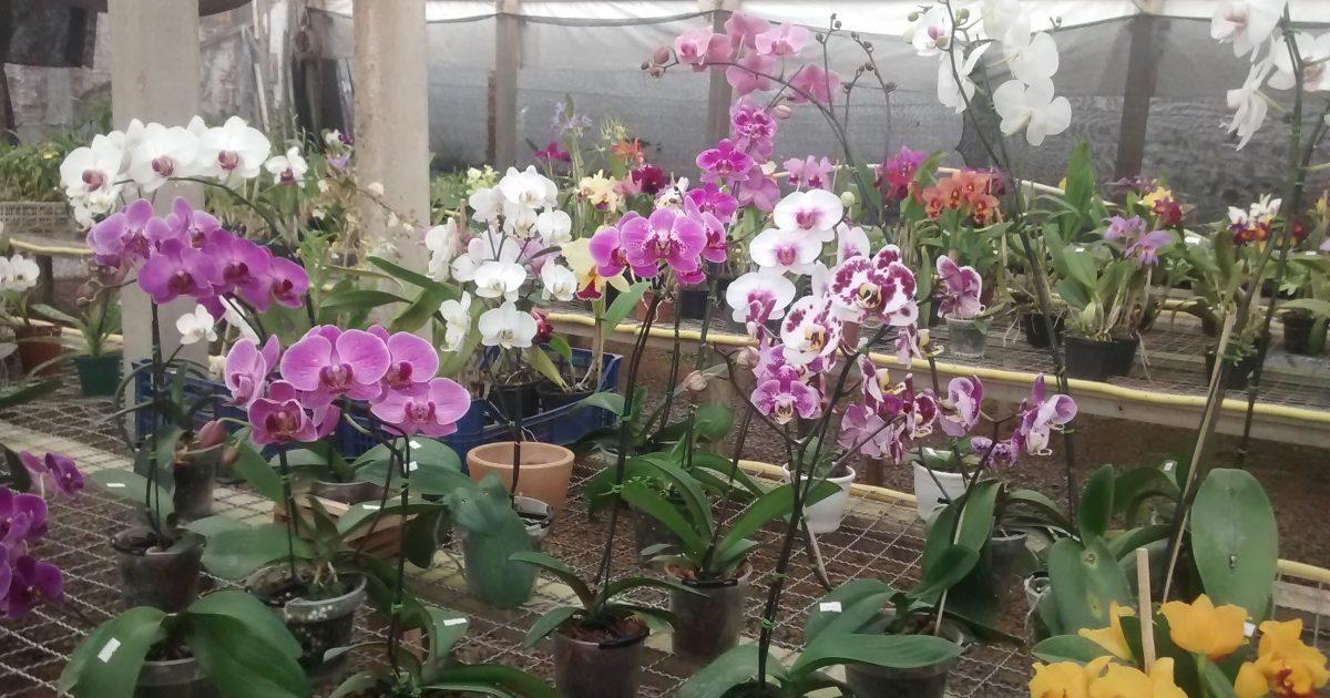 44ª Exposição Nacional de Orquídeas acontece no Espaço Cultural
