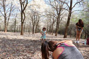 Ipê - bosque2