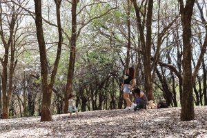 Ipê - bosque7
