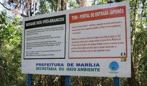 Ipê - bosque8